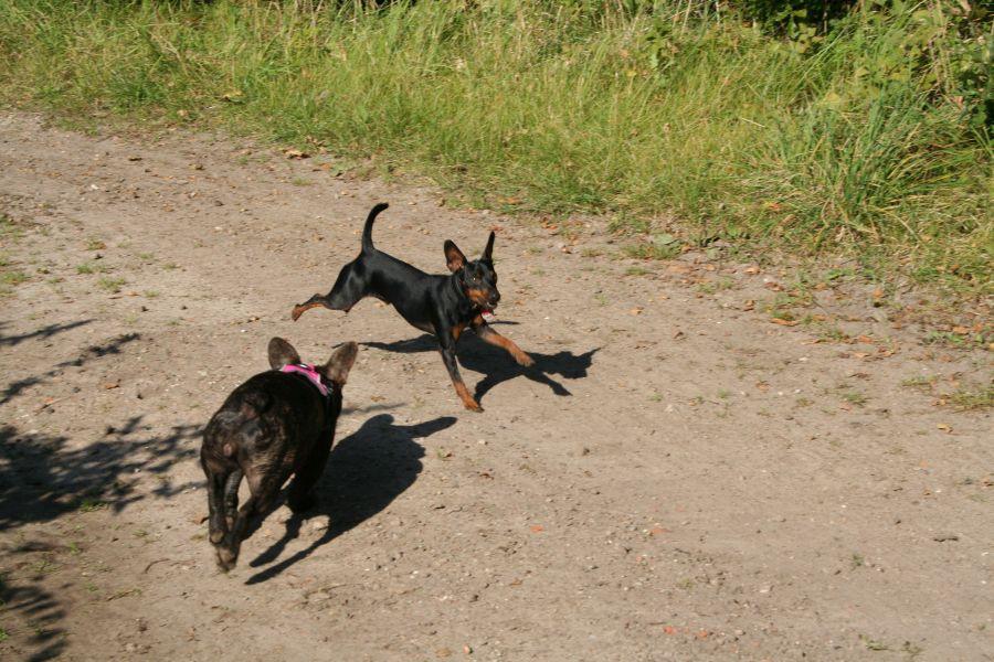 Hundespass