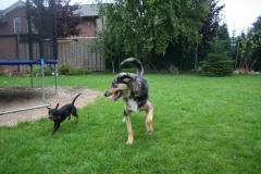 Benji und Jackson