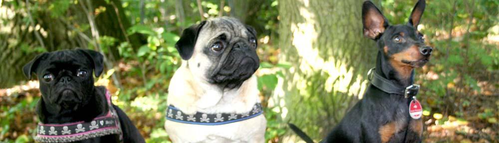 Smoothdogs – Ihr Hund und Sie!
